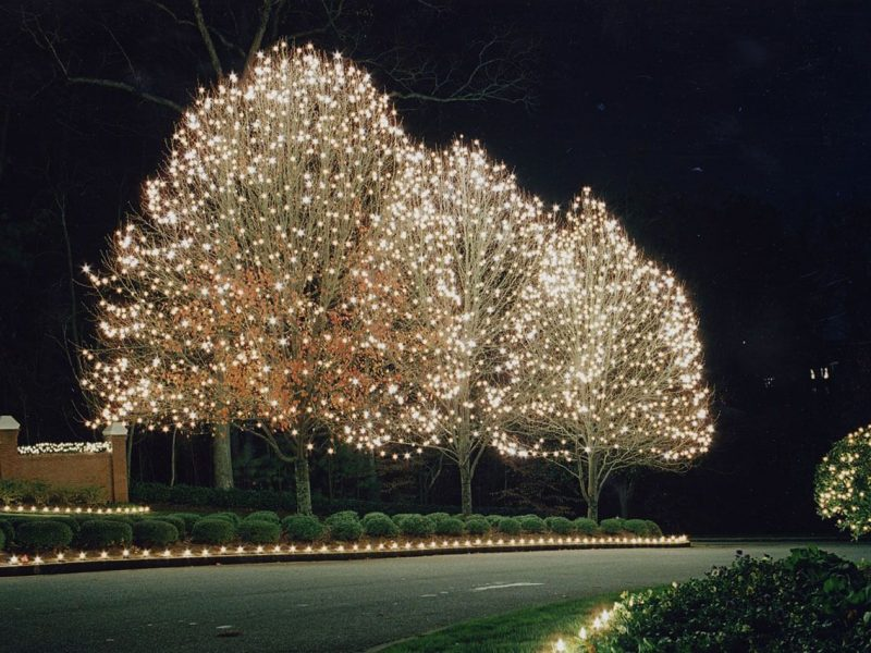 Lights for trees and shrubs